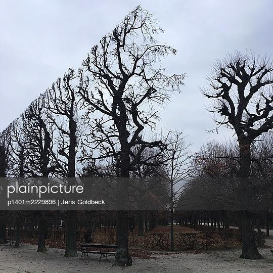 Gestutzte Bäume im Herbst, Schlosspark Schönbrunn - p1401m2229896 von Jens Goldbeck