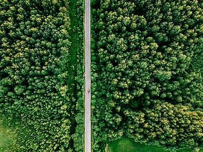 Aerial view of road amidst trees growing in forest - p1166m2025351 by Cavan Images