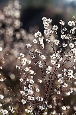 Light effect, brush - p958m2152914 by KL23