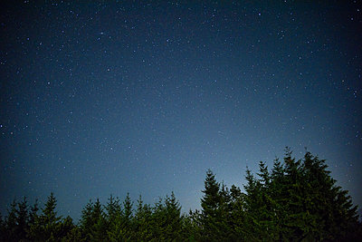 Low angle view of trees against star field in sky at night - p1166m1174082 by Cavan Images