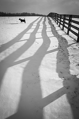 Shadow of fence in snow and dog, Johnstown, Ohio, USA - p343m1490578 by Cameron MacPhail / Aurora Photos