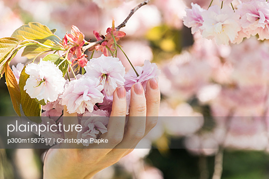Woman holding cherry blossoms - p300m1587517 by Christophe Papke