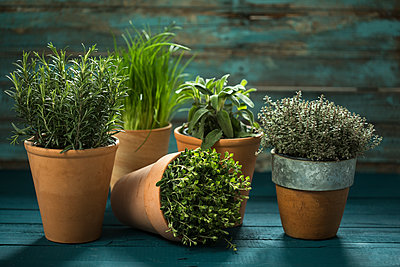 Flowerpots with various fresh herbs on wood - p300m1228276 by Roman Märzinger