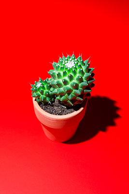 Kaktus - p1149m2089570 von Yvonne Röder