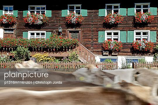 Traditioneller Viehscheid, Allgäu, Bayern, Deutschland - p1316m1161201 von Christoph Jorda