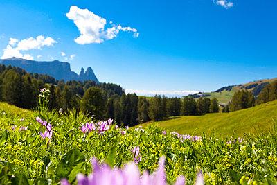 Austria - p4880495 by Bias