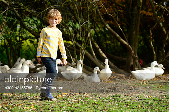 Boy with domestic ducks on meadow - p300m2155788 by Eyecatcher.pro