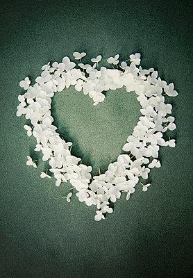 Hydrangea petals forming heart  - p1248m1462106 by miguel sobreira