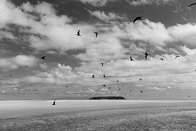 Polynesia, Tetiaroa, Birds flying above a lagoon - p1487m2253944 by Ludovic Mornand