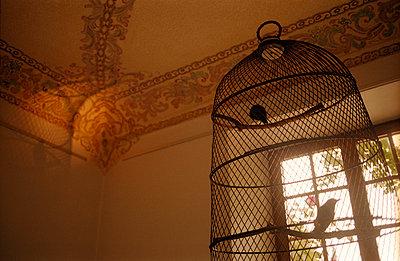 Birdcage - p3523034 by Jenny Lindhe