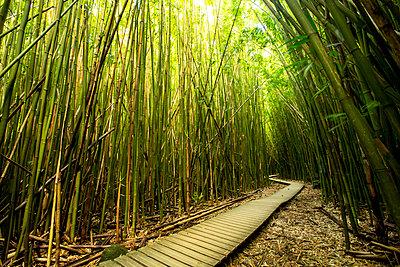 Wooden walkway through bamboo forest - p555m1410699 by Jeffrey Davis