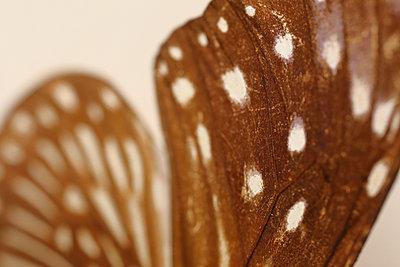 Macro butterfly - p1054m2278057 by Maria Kazvan