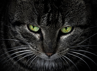 Cat with green eyes - p1445m2125678 by Eugenia Kyriakopoulou