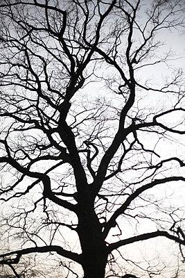Baum Anschnitt - p3410098 von Mikesch