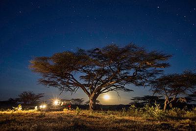 Kenya, Shaba National Reserve. A full moon rises under a huge Acacia Tortilis in Shaba National Reserve. - p652m1058725 by Niels van Gijn