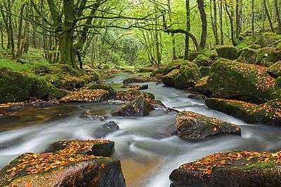The River Fowey at Golitha Falls on Bodmin Moor, Cornwall, England, United Kingdom, Europe - p871m1017474 by Adam Burton