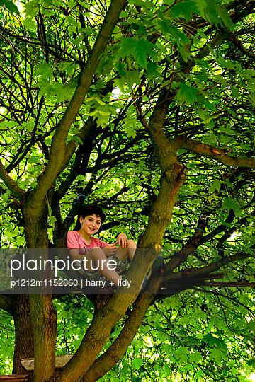 Junge im Baum - p1212m1152860 von harry + lidy