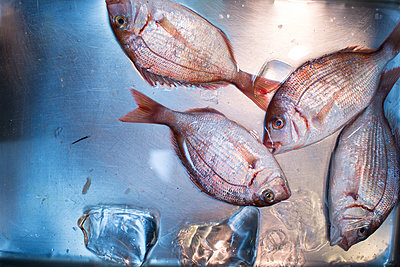 Giltheads on sale at Tsukiji fish market - p1134m1440631 by Pia Grimbühler