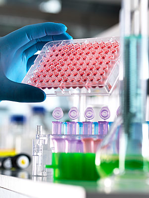Scientist preparing human blood samples in a multi well plate ready for automated analysis in the laboratory. Additional keywords: Blood sample, blood screening, medical trail, health, multi well plate, automated analysis, pharmaceutical research, diagnos - p300m2143316 von Andrew Brookes