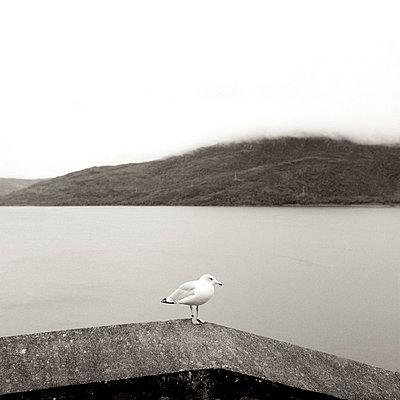 Seagull - p5450033 by Ulf Philipowski