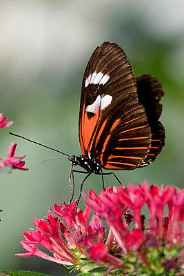 Butterfly - p9790417 by Weber-Decker