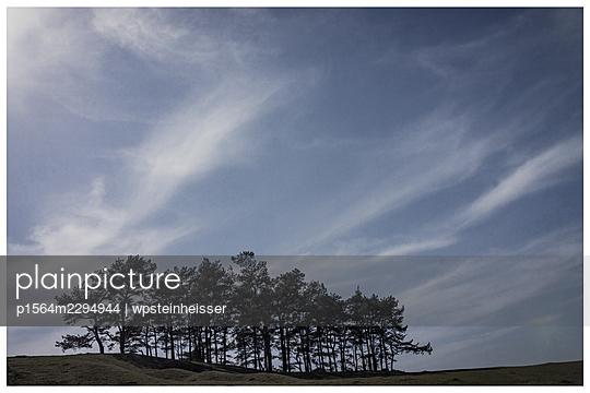 Group of trees in spring - p1564m2294944 by wpsteinheisser