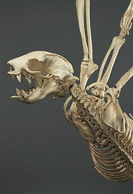 Skeleton Sloth - p2683216 by Markus Tollhopf