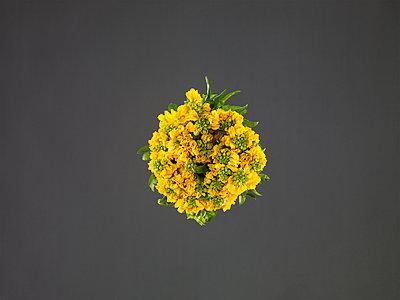 Goldlack Blumenstrauß - p962m1217131 von Robert Schlossnickel