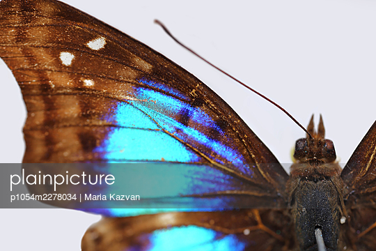 Macro Butterfly - p1054m2278034 by Maria Kazvan