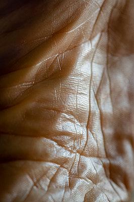 Sole of foot skin - p1418m2216000 by Jan Håkan Dahlström
