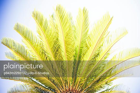 Palm tree - p943m2293127 by Do-It-Studios