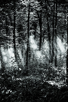 Sunbeams breaking through forest - p1170m2020138 by Bjanka Kadic
