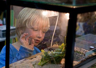 Boy looking at terrarium - p896m834504 by Arie Kievit