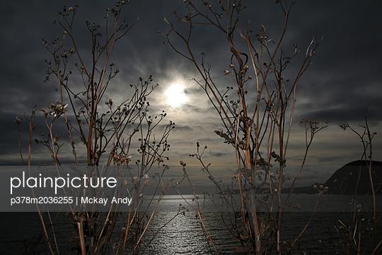 p378m2036255 von Mckay Andy