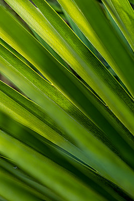 Close up of palm leaves - p1057m2124798 by Stephen Shepherd