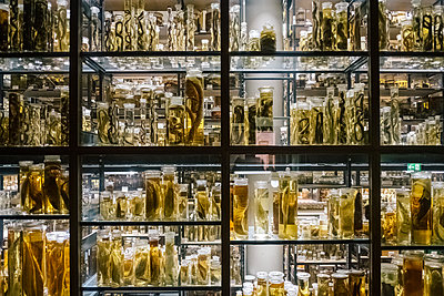 Glass containers with exhibits, wet collection - p1600m2215414 by Ole Spata