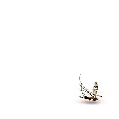 Mücke - p979m1513327 von Iren Dymke