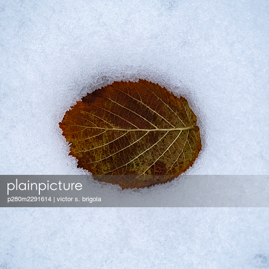 Leaf in the Snow - p280m2291614 by victor s. brigola