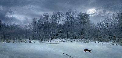 Wolfszeit - p1653m2232307 von Vladimir Proshin