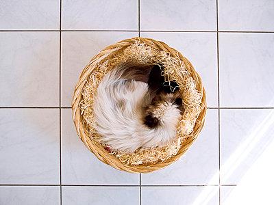 Cat - p2800109 by victor s. brigola
