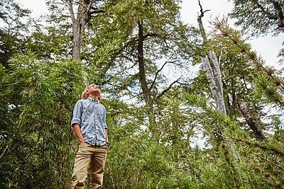 Chile, Puren, Nahuelbuta National Park, boy standing in bamboo forest looking up - p300m2069282 by Stefan Schütz