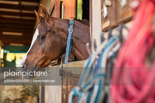 Horse on a farm in stable - p300m2005265 von zerocreatives