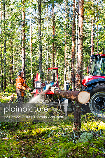 Feller buncher at work in forest - p312m2217193 by Thomas Adolfsén