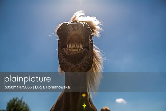 p858m1475065 by Lucja Romanowska