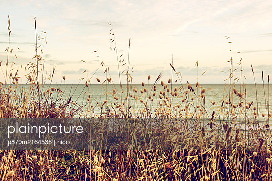 France, Brittany, Grasses on the beach - p879m2164535 by nico