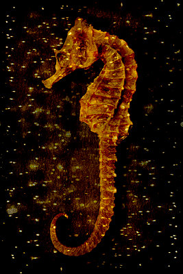 Mystical seahorse - p1028m2082076 by Jean Marmeisse