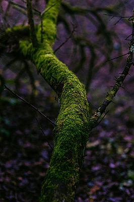 Moss - p1088m902177 by Martin Benner