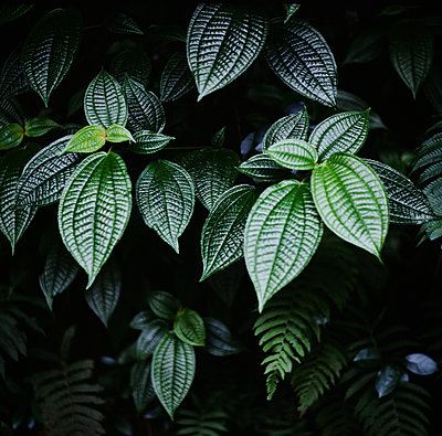 Deep Green Tropical Textured Leaves - p1166m2159426 by Cavan Images