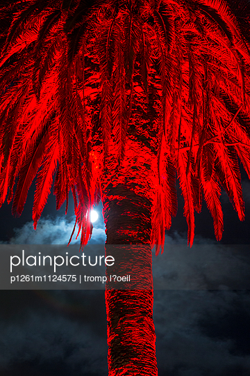 Palme, rot - p1261m1124575 von tromp l'oeil