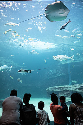 Two Oceans Aquarium, visitors marvel at sea animals - p1640m2246232 by Holly & John